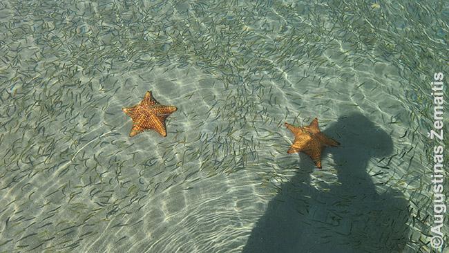 Jūrų žvaigždžių paplūdimyje Panamoje, kur aplinkui kojas plaukioja, rodos, milijonai žuvelių ir pilna jūros žvaigždžių
