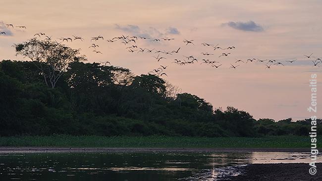 Saulėlydis Pantanalyje