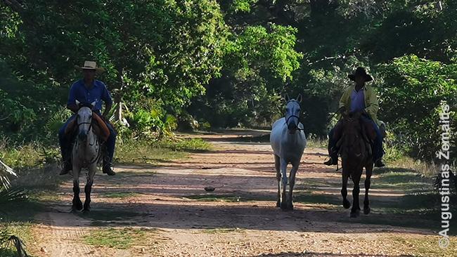 Saulėtekio žygyje jau prašvitus susitikome vietinius ant arklių