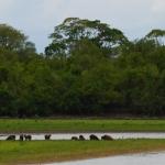 Pantanalis - Pietų Amerikos žvėrynas