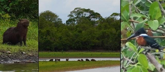 Pantanalis – Pietų Amerikos žvėrynas