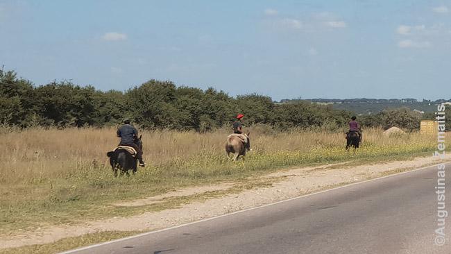Šalikele joja Argentinos simbolis gaučai, iki šiol ganantys gyvulius su arkliais