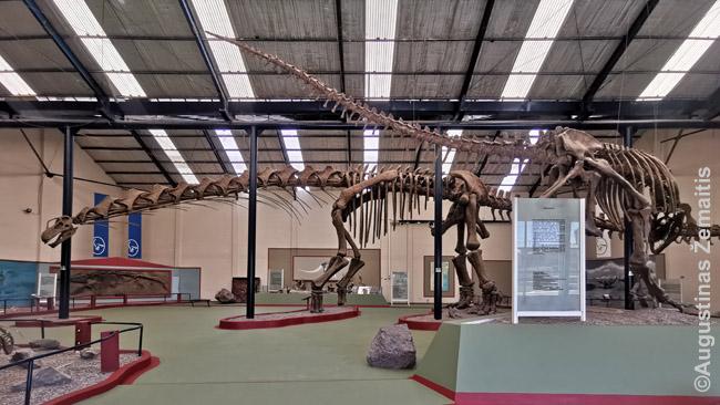 Argentinozauro skeletas - muziejus buvo uždarytas, bet pavyko nufotografuoti per langą. Tiesa, tokie įpūdingi stovintys skeletai nėra tikri - tik kopijos. Bet tuose pat muziejuose guli ir tikri kaulai. Tiesiog, visų to paties individo kaulų iškasti nepavyksta, nes tam, kad susidarytų fosilijos, reikia labai retų gamtinių aplinkybių