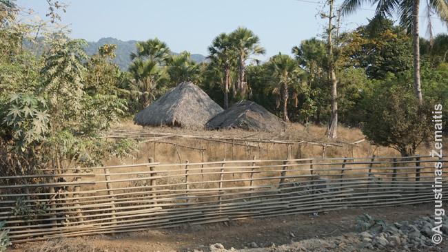Namai Rytų Timore