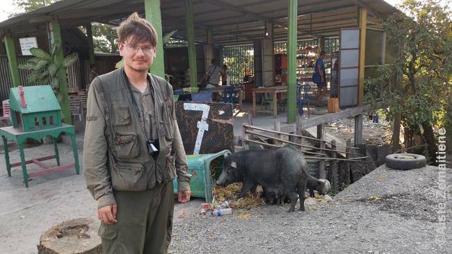 Aš prie paršelių prie pakelės restorano Rytų Timore