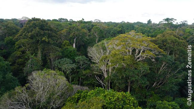 Džiunglių lajos iš mokslininkų pastatyto bokšto, kur jie stebi klimato kaitos pokyčius