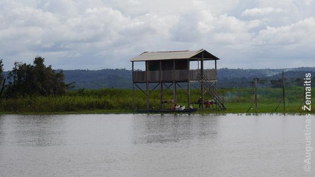 """Namas ant polių Santareme. Prie jo galima priplaukti ir pakilus upės vandeniui, o daug kitų namų regione per liūčių sezoną apleidžiami ir """"atiduodami upei"""" (jų savininkai - gyvūnų ganytojai - tada keliasi į aukštesnes žemes), bet pakankamai tvirti, kad nesugriūtų"""