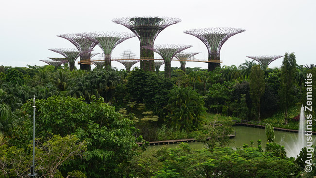 Gardens by the Bay metaliniai medžiai. Vakarais juos apšviečia šviesų šou - geriausia stebėti ne iš čia, o nuo pačių medžių, tada dar girdisi ir muzika