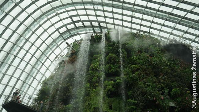Debesų miškas po stogu Singapūro Gardens by the Bay