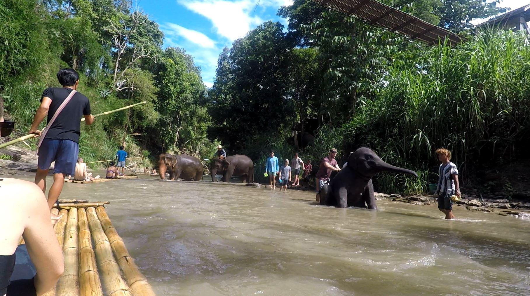 Bambukiniu plaustu praplaukiame pro dramblius