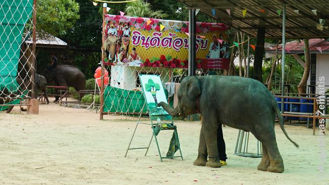 Dramblių kaimo drambliukas, kaip kasdien, tapo paveikslą. Paveikslai tada parduodami turistams. Atsirado du orėję pirkti savo vaikams, tad drambliukui teko tapyti antrą.