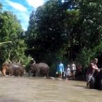 Tailandas - šalis visiems, bet ne visų