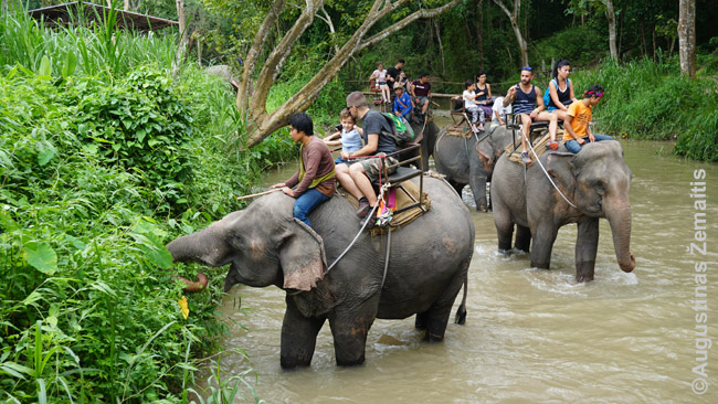 Žygis drambliais šiauriniame Tailande