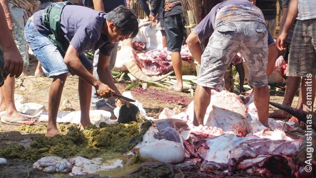 Buivolų išdarinėjimas. Kairėje - šieno krūva iš perpjauto skrandžio