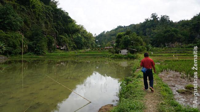 Paskui gidą per toradžų krašto ryžių laukus atgal nuo Lemo kapinių