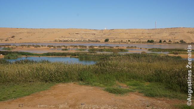 Žvilgsnis iš Lajūno centro į dykumą
